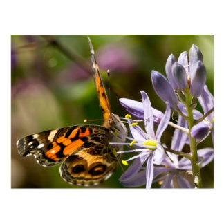 Orange Butterfly on Wild Hyacinth Apparel & Gifts Postcard