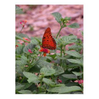 Orange Butterfly Photo Postcard