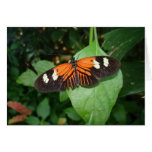 orange butterfly postcard greeting cards
