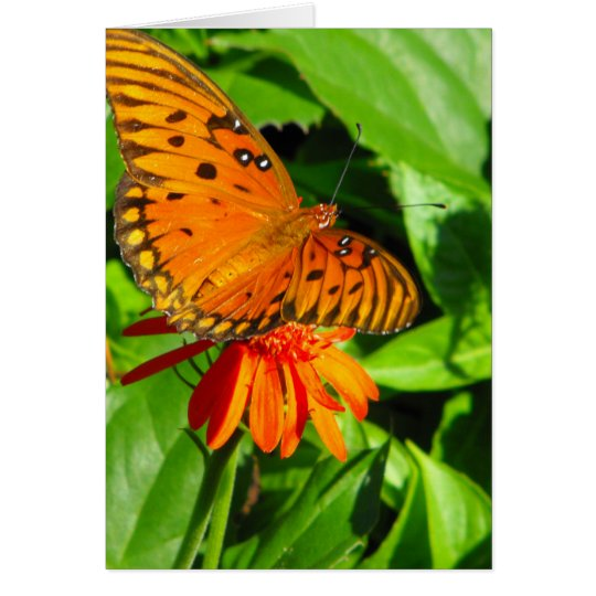 Orange Butterfly Upclose Card