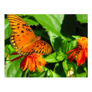 Orange Butterfly Upclose Postcard