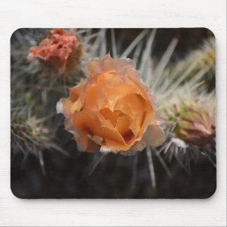 Orange Cactus Blossom mousepad