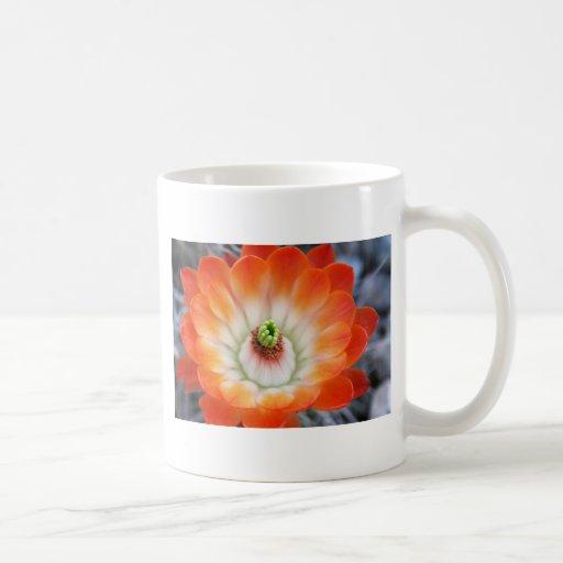 Orange Cactus Flower Classic White Coffee Mug