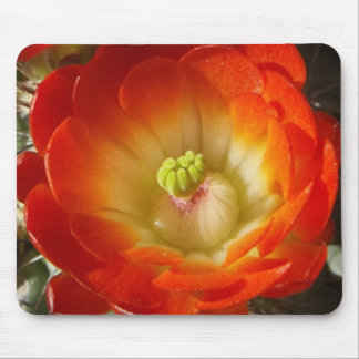 Orange Cactus Flower Mouse Pad