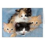 Orange, Calico and Black/White Kittens Cards