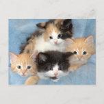 Orange, Calico and Black/White Kittens Postcards