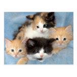 Orange, Calico and Black/White Kittens Postcards