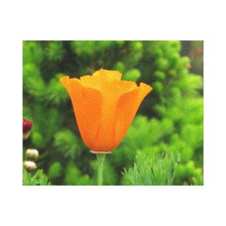 Orange California Flower Canvas Print