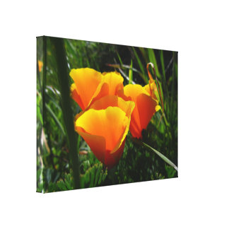 Orange California Flowers Canvas Print