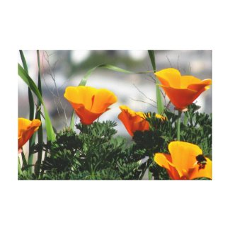 Orange California Flowers Stretched Canvas Prints