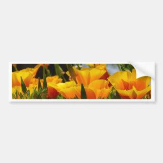 Orange California Poppies_3.1 Bumper Sticker