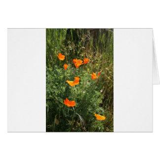 Orange California Poppies Card