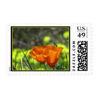 Orange California Poppies Postage Stamp