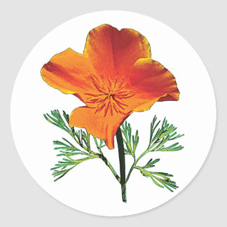 Orange California Poppy Classic Round Sticker