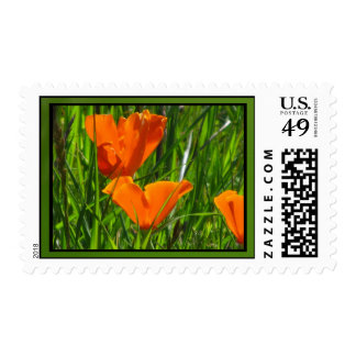 Orange California Poppy Flower Stamps
