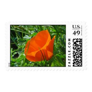 Orange California Poppy Flower Postage