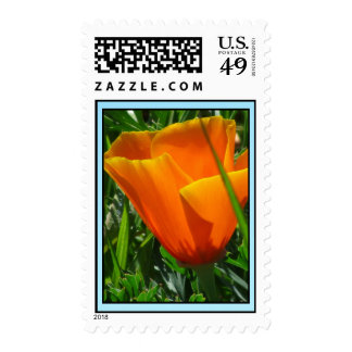 Orange California Poppy Flower Stamp