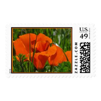 Orange California Poppy Flowers Stamps