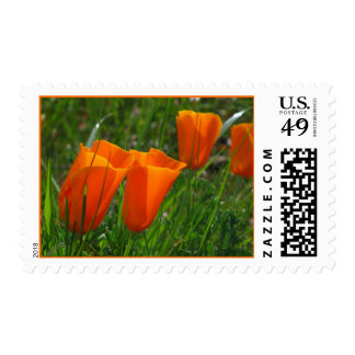 Orange California Poppy Flowers Postage Stamp