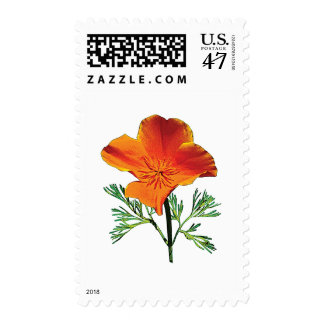 Orange California Poppy Postage