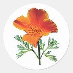 Orange California Poppy Stickers