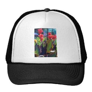 Orange Canna Lily Canna Hybride flowers Mesh Hats