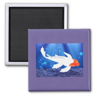 Orange Capped Kohaku Koi in Blue Lagoon Magnet