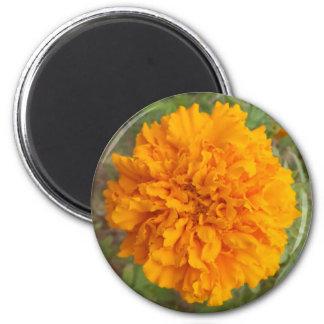 Orange Carnation magnet