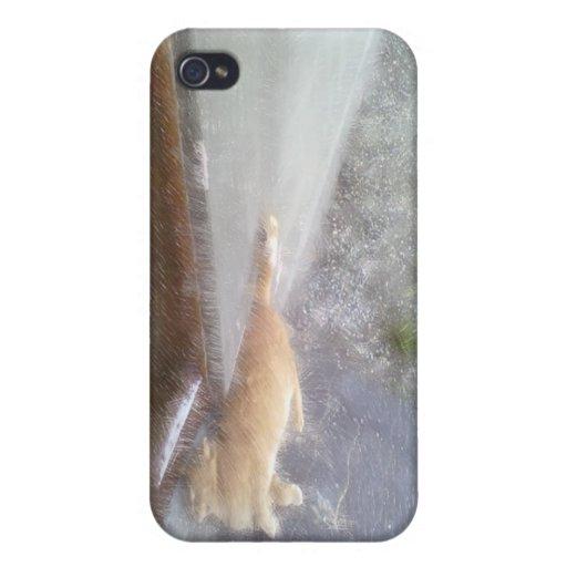 Orange cat cases for iPhone 4