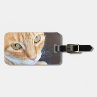 Orange cat closeup bag tag