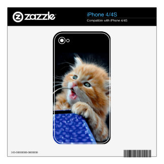 Orange Cat Cub Playing and Biting Blue Decals For The iPhone 4S