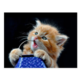 Orange Cat Cub Playing and Biting Blue Postcard