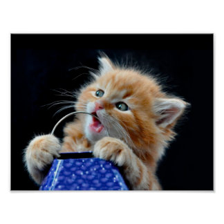 Orange Cat Cub Playing and Biting Blue Poster
