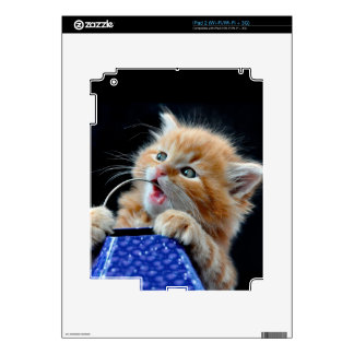 Orange Cat Cub Playing and Biting Blue Skins For The iPad 2
