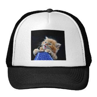 Orange Cat Cub Playing and Biting Blue Trucker Hat