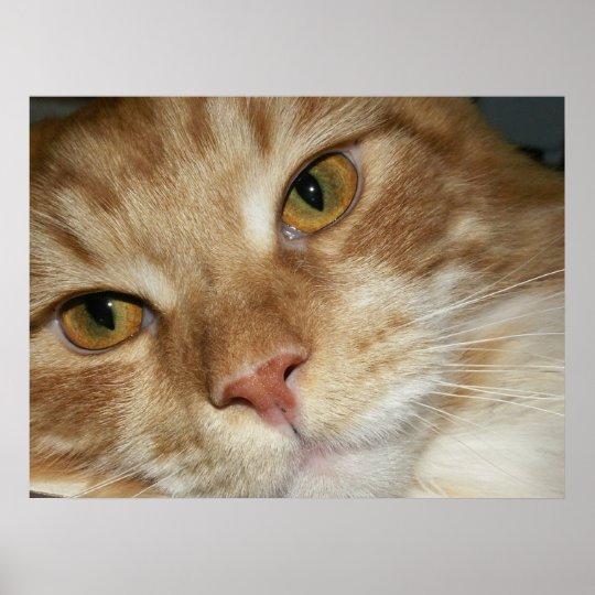 Orange Cat Eyes Poster