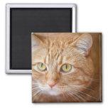 Orange cat fridge magnets