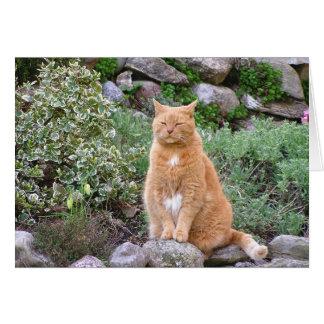 Orange Cat in the Garden Greeting Card