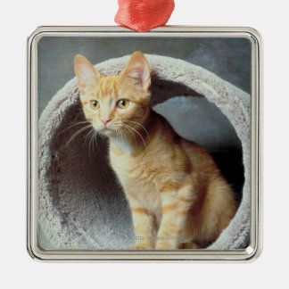 Orange Cat in Toy Christmas Tree Ornaments