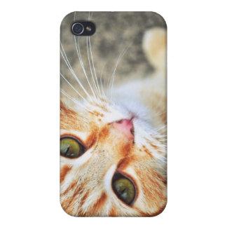 Orange Cat  iPhone 4 Case