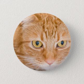 Orange cat pinback button