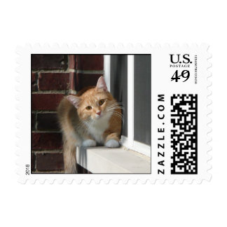 Orange Cat Postage Stamp