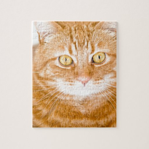 Orange Cat Puzzle