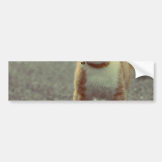 Orange cat with glasses bumper sticker