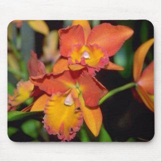 Orange Cattleya flowers Mouse Pad
