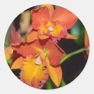 Orange Cattleya flowers Stickers