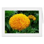 Orange Chrysanthemum Cards