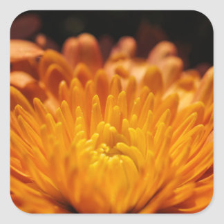 Orange Chrysanthemum Flower Square Stickers