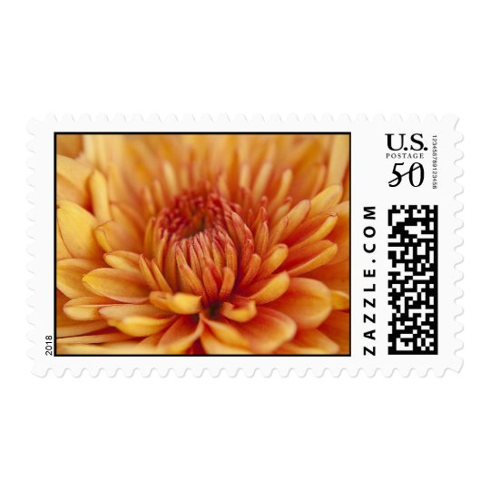 Orange Chrysanthemum Postage