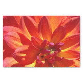 Orange Chrysanthemum tissue paper